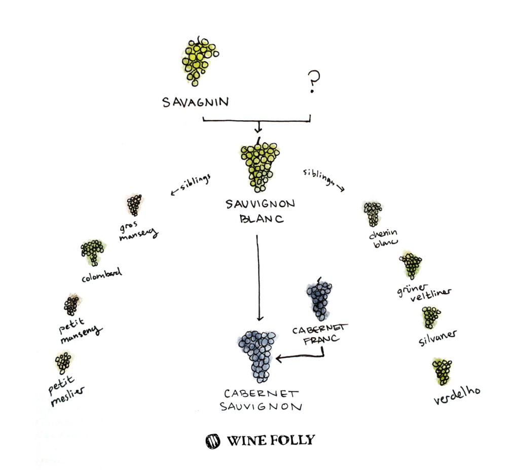 credit: http://winefolly.com/review/enthusiasts-guide-sauvignon-blanc/